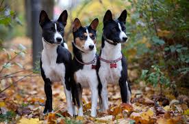 Hypoallergenic Shed Free Dogs by Top 10 Sneeze Free Hypoallergenic Dogs