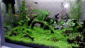 Aquascape Mini - YouTube Aquascape Designs For Your Aquarium Room Fniture Ideas Aquascaping Articles Tutorials Videos The Green Machine Blog Of The Month August 2009 Wakrubau Aquascaping World Planted Tank Contest Design Awards Awesome A Moss Experiment Driftwood Sale Mzanita Pieces Two Gardens By Laszlo Kiss Mini Youtube Warsciowestronytop