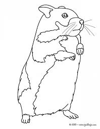 Fresh Coloring Pages Of Hamsters 64 In For Kids Online With