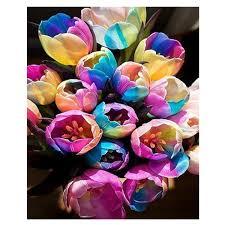 buy wholesale rainbow tulip flower seeds from china rainbow