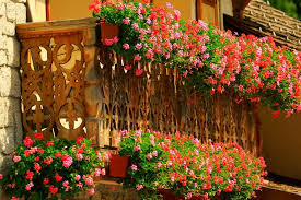 Balcony Flower Boxes And A Profusion Of Pink Red Along The Entire Width