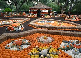 Pumpkin Patch Marble Falls by Texas Pumpkin Patches The Daytripper