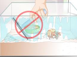 Do Hermit Crabs Shed Their Legs how to take care of a molting hermit crab 12 steps