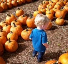 Pumpkin Patches Columbus Oh by Family Friendly Fall Festivals In Columbus
