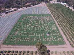 Faulkner Pumpkin Patch by Stories Rotary Club Of Santa Paula California