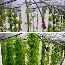 9 Reasons Why Vertical Farms Fail Bright Agrotech Medium
