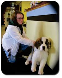 countryside animal hospital home countryside veterinary clinic llp lowville ny