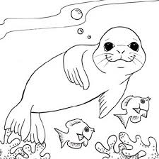 Monk Seal And Two Little Fish Coloring Page