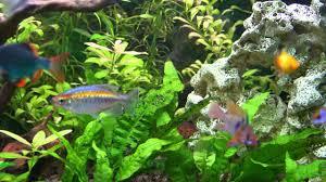 aquarium poisson prix aquarium et poissons d eau douce