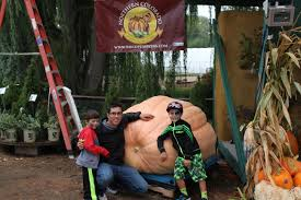 Largest Pumpkin Contest Winners by Giant Pumpkin Growers Will Size Up The Competition