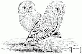 Birds Barn Owl Brings A Prey For Its Babies Owls Coloring Pages ... White And Brown Barn Owl Free Image Peakpx Sd Falconry Barn Owl Box Tips Encouraging Owls To Nest Habitat Diet Reproduction Reptile Park Centre Stock Photos Images Alamy Bird Of Prey Tyto Alba Video Footage Videoblocks Barn Owl Tyto A Heart Shaped Face Buff Back Wings Bisham Group Bird Of Prey Clipart Pencil In Color British Struggle Adapt Modern Life Birdguides Beautiful Owls Pulborough Brooks The