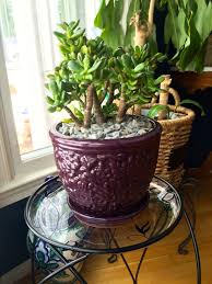 Plants For Bathroom Feng Shui by Feng Shui Clutter Clearing Archives Martha Brettschneider