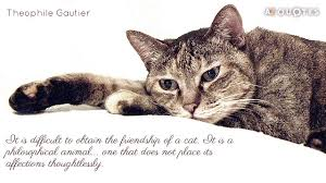cat quotes top 25 cat quotes of 1000 a z quotes