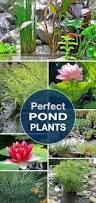 Aquascape Patio Pond Australia by 484 Best Water Gardening Images On Pinterest Garden Fountains