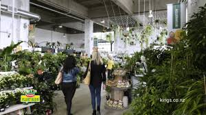 New-look Kings Store And Cafe - Orakei Road, Remuera - YouTube Archie Eats Kings Plant Barn Archies Journal By Michael Ngariki Garden Design Cafe Henderson Aucklandnzcom Daniels Wood Land On The Set For Redwood Kippen Home Facebook Youtube Monthly Gardening Checklist December