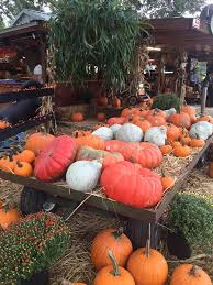 Pumpkin Patch College Station 2014 by 22 Central Florida Pumpkin Patches And Corn Mazes To Put You In