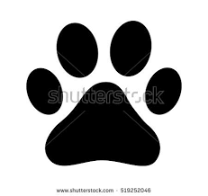 cat paw prints paw stock images royalty free images vectors