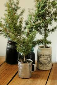 Fraser Fir Christmas Trees Delivered by Fresh Ideas Christmas Tree In A Pot Fraser Fir Trees Delivered