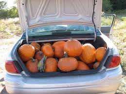 Southern Illinois Pumpkin Patches by Lake County Pumpkin Patches 2016 Little Lake County