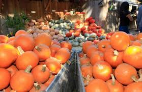 Cal Poly Pumpkin Patch 2016 by Top 10 Ideas For Having Fun This Fall In Slo County The Tribune