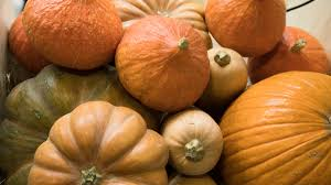 Uc Irvine Pumpkin Patch by Nbc 7 San Diego Sales Leads Email Lists Email Addresses