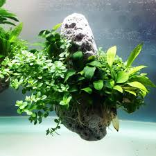 Floating Rock By Oliver Knott – à ESA - European Space Agency ... Aquascaping Artist Oliver Knott Scapingaquarium Pinterest Schwimmende Stein Steine Im Aquarium By Knott Youtube Aquascapi Sequa Interzoo 2012 Feat Chris Lukhaup Live Part 3 The Island Aquascape Step Aquariology With At The Koelle Zoo Heidelberg New Project Photo Editor Online And Editor Made Teil 1 Inspiration Tips Tricks Love Aquascaping Octopus Aquarium Via Aquac1ubnet