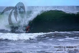 Santa Cruz Pumpkin Seed Surfboard by Pumpkin Seeds Surf Simply