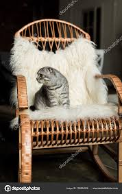 Cat In Rocking Chair | Cat On Rocking Chair — Stock Photo ...