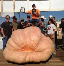 Pumpkin Festival Circleville Ohio 2 by Halloween Pumpkins Fun Festivals Carving Recipes Facts And History