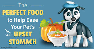 Too Much Pumpkin For Dogs Diarrhea by Pumpkin The Bowel Soothing Food For Gi Upsets And Diarrhea