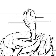 Rattle Snake Cobra Coloring Page