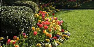 now is the time to plant bulbs 盪 rutgers landscape