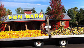 Bengtson Pumpkin Farm Lockport by Chicago Pumpkin Patches And Apple Orchards