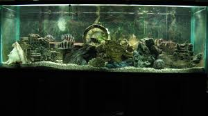 Spongebob Aquarium Decor Amazon by 9 Best Fish Tanks Images On Pinterest Fish Tanks Aquarium Ideas