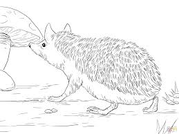 Hedgehog Coloring Pages Free Line Drawings Super Sonic The To Print Printable Full Size
