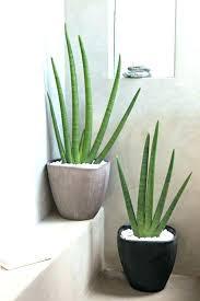 plante verte dans une chambre à coucher plante pour salle de bain verte chambre a coucher 4 chlorophytum bey