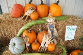 Best Pumpkin Patches Indianapolis by Sickels Tree Farm Pumpkin Patch Lynn In Photos U0026