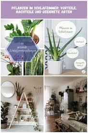 pflanzen im schlafzimmer sehen nicht nur gut aus sie