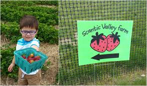 Pumpkin Picking Ct Easton by Farm This Connecticut Mom
