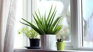 plante dans chambre à coucher je veux des plantes dans ma chambre