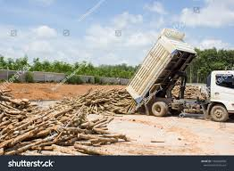 100 Dump Truck Storage Slab Wood Yard Stock Photo Edit Now 1196906056