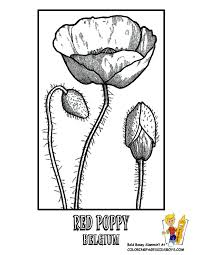 Poppies Coloring Pages For Kids