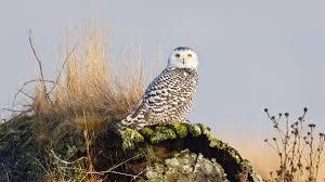 Rare Bird Sightings Share Or Shut Up