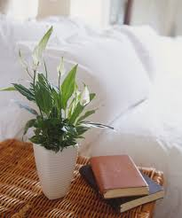 Best Plant For Bathroom Feng Shui by 10 Best Indoor Plants For Apartments Low Maintenance Plants For