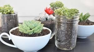 entretien plante grasse d interieur plante grasse d intérieur l atelier des fleurs