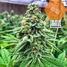 Max Marijuana Buds 2