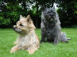 Top 10 Dogs That Dont Shed by Top 20 Cutest Dog Breeds Around The World