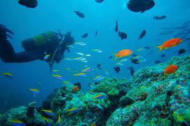 100 Conrad Maldive S Sun Safaris
