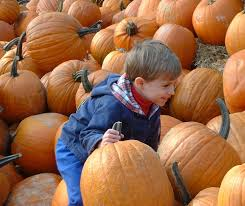 East Orlando Pumpkin Patch by 12 Fall Festivals In Central Florida