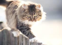 verhaltensanalyse als basis für deine katzenerziehung